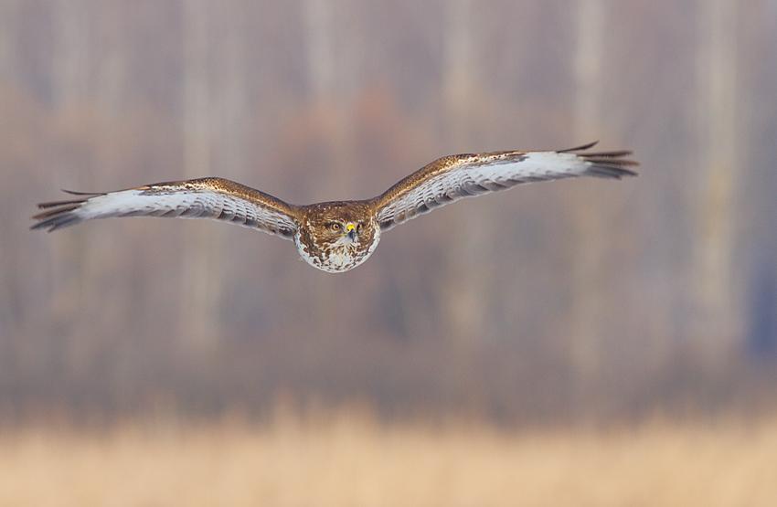 Olyv-flight.jpg